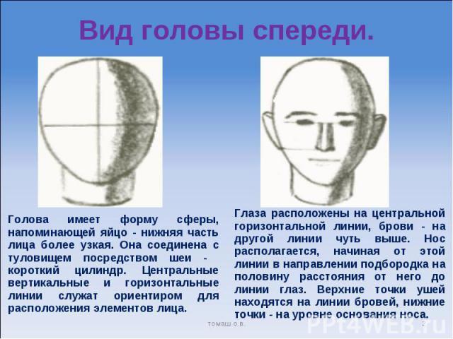 Вид головы спереди. Голова имеет форму сферы, напоминающей яйцо - нижняя часть лица более узкая. Она соединена с туловищем посредством шеи - короткий цилиндр. Центральные вертикальные и горизонтальные линии служат ориентиром для расположения элемент…