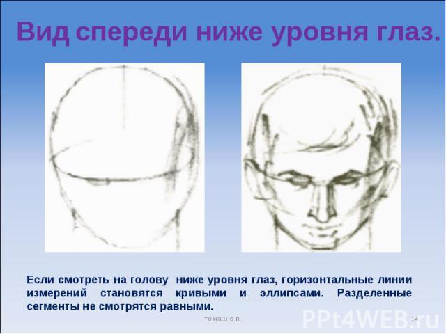 Вид спереди ниже уровня глаз. Если смотреть на голову ниже уровня глаз, горизонтальные линии измерений становятся кривыми и эллипсами. Разделенные сегменты не смотрятся равными.