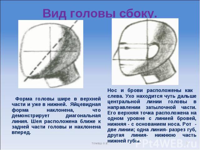 Вид головы сбоку. Форма головы шире в верхней части и уже в нижней. Яйцевидная форма наклонена, что демонстрирует диагональная линия. Шея расположена ближе к задней части головы и наклонена вперед. Нос и брови расположены как слева. Ухо находится чу…