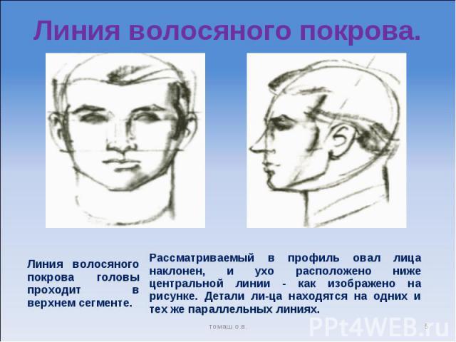Линия волосяного покрова. Линия волосяного покрова головы проходит в верхнем сегменте. Рассматриваемый в профиль овал лица наклонен, и ухо расположено ниже центральной линии - как изображено на рисунке. Детали лица находятся на одних и тех же паралл…