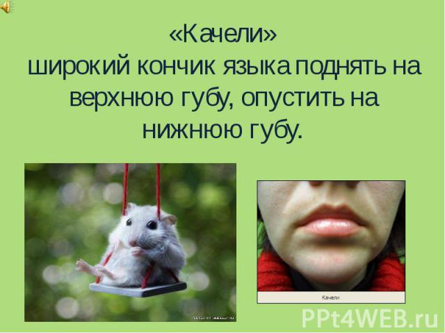 «Качели»широкий кончик языка поднять на верхнюю губу, опустить на нижнюю губу.