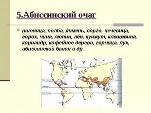 5.Абиссинский очагпшеница, полба, ячмень, сорго, чечевица, горох, чина, люпин, л