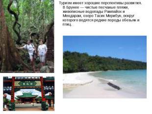 Туризм имеет хорошие перспективы развития. В Брунее — чистые песчаные пляжи, жив