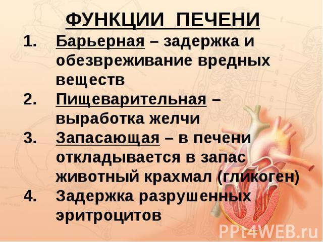 ФУНКЦИИ ПЕЧЕНИБарьерная – задержка и обезвреживание вредных веществПищеварительная – выработка желчиЗапасающая – в печени откладывается в запас животный крахмал (гликоген)Задержка разрушенных эритроцитов