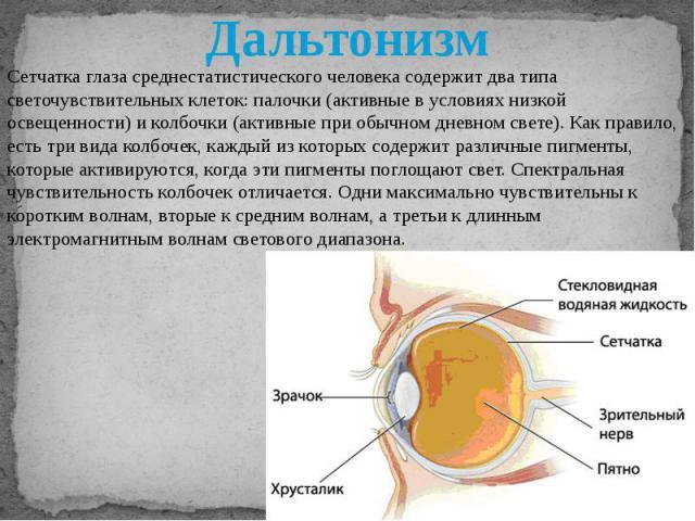 Сетчатка глаза среднестатистического человека содержит два типа светочувствительных клеток: палочки (активные в условиях низкой освещенности) и колбочки (активные при обычном дневном свете). Как правило, есть три вида колбочек, каждый из которых сод…