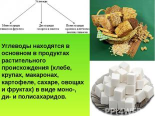 Углеводы находятся в основном в продуктах растительного происхождения (хлебе, кр