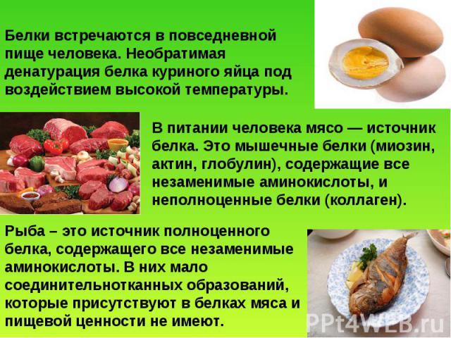 Белки встречаются в повседневной пище человека. Необратимая денатурация белка куриного яйца под воздействием высокой температуры. В питании человека мясо — источник белка. Это мышечные белки (миозин, актин, глобулин), содержащие все незаменимые амин…