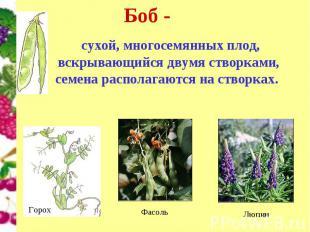 Боб - сухой, многосемянных плод, вскрывающийся двумя створками, семена располага