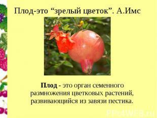 """Плод-это """"зрелый цветок"""". А.Имс Плод- это орган семенного размножения цветковых"""