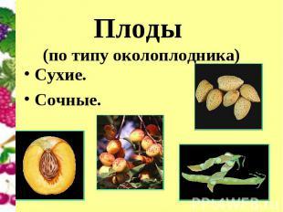 Плоды (по типу околоплодника) Сухие.Сочные.