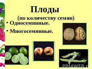 Плоды (по количеству семян) Односемянные.Многосемянные.