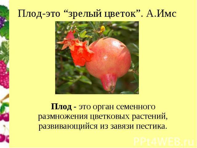 """Плод-это """"зрелый цветок"""". А.Имс Плод- это орган семенного размножения цветковых растений, развивающийся из завязи пестика."""
