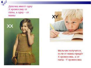 Девочка имеет однуХ хромосому от папы, а одну – от мамы Мальчик получится, если