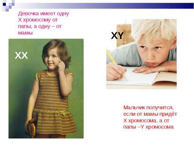 Девочка имеет однуХ хромосому от папы, а одну – от мамы Мальчик получится, если от мамы придёт Х хромосома, а от папы –Y хромосома