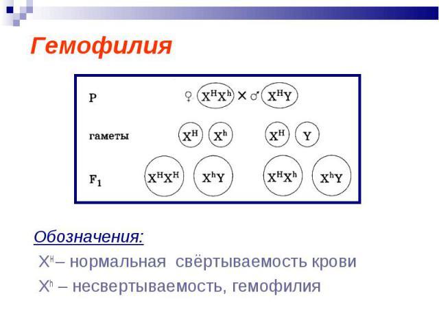 Гемофилия Обозначения: ХН – нормальная свёртываемость крови Xh – несвертываемость, гемофилия