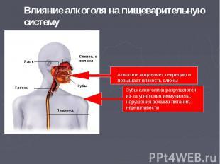 Влияние алкоголя на пищеварительную систему Алкоголь подавляет секрецию и повыша