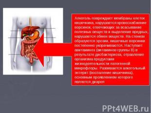 Алкоголь повреждает мембраны клеток кишечника, нарушается кровоснабжение ворсино