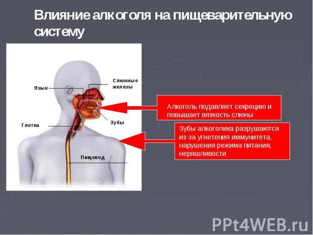 Влияние алкоголя на пищеварительную систему Алкоголь подавляет секрецию и повышает вязкость слюны Зубы алкоголика разрушаются из-за угнетения иммунитета, нарушения режима питания, неряшливости