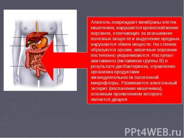 Алкоголь повреждает мембраны клеток кишечника, нарушается кровоснабжение ворсинок, отвечающих за всасывание полезных веществ и выделение вредных, нарушается обмен веществ. На стенках образуются эрозии, кишечные ворсинки постепенно укорачиваются. Нас…