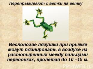 Перепрыгивают с ветки на ветку Веслоногие лягушки при прыжке могут планировать в