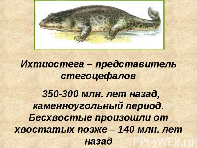 Ихтиостега – представитель стегоцефалов 350-300 млн. лет назад, каменноугольный период. Бесхвостые произошли от хвостатых позже – 140 млн. лет назад