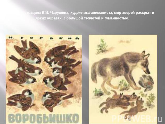 В иллюстрациях Е И. Чарушина, художника-анималиста, мир зверей раскрыт в ярких образах, с большой теплотой и гуманностью.