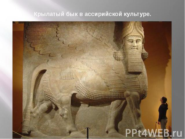 Крылатый бык в ассирийской культуре.