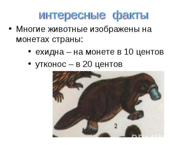 интересные факты Многие животные изображены на монетах страны: ехидна – на монете в 10 центов утконос – в 20 центов