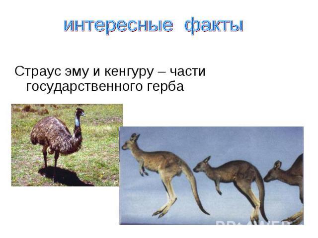интересные факты Страус эму и кенгуру – части государственного герба