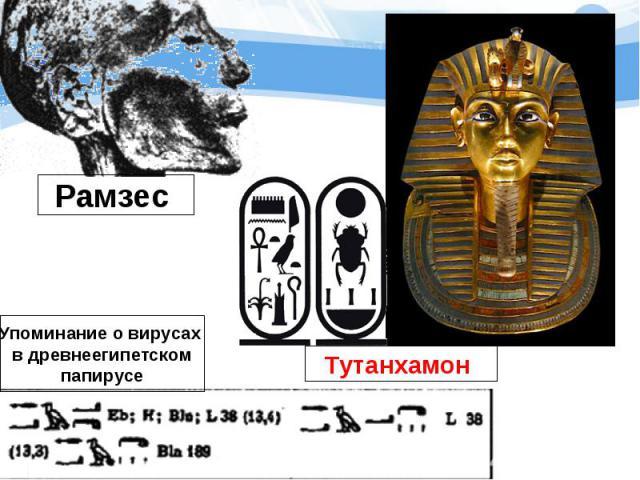 Рамзес Упоминание о вирусах в древнеегипетскомпапирусе Тутанхамон