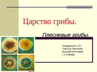 Царство грибы. Плесневые грибы Бондаренко Е.ЮУчитель биологии высшей категорииг.