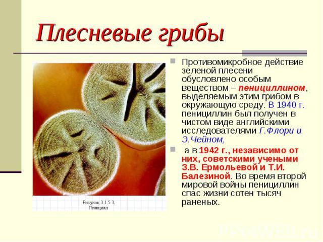 Плесневые грибы Противомикробное действие зеленой плесени обусловлено особым веществом – пенициллином, выделяемым этим грибом в окружающую среду. В 1940 г. пенициллин был получен в чистом виде английскими исследователями Г.Флори и Э.Чейном, а в 1942…