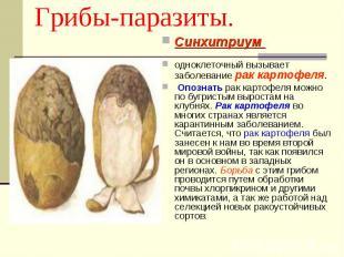 Грибы-паразиты. Синхитриум одноклеточный вызывает заболевание рак картофеля. Опо