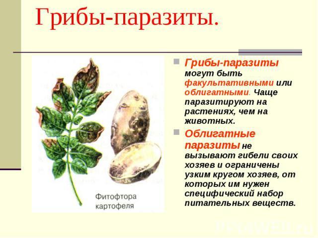 Грибы-паразиты. Грибы-паразиты могут быть факультативными или облигатными. Чаще паразитируют на растениях, чем на животных.Облигатные паразиты не вызывают гибели своих хозяев и ограничены узким кругом хозяев, от которых им нужен специфический набор …