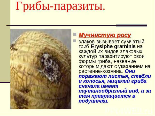 Грибы-паразиты. Мучнистую росу злаков вызывает сумчатый гриб Erysiphe graminis на каждой их видов злаковых культур паразитируют свои формы гриба, название которым дают с указанием на растение-хозяина. Они поражают листья, стебли и колосья, мицелий г…