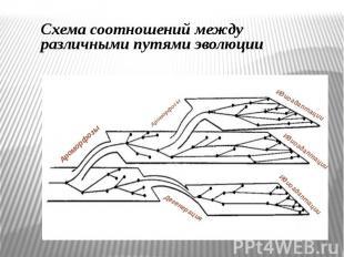 Схема соотношений между различными путями эволюции