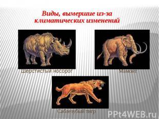 Виды, вымершие из-за климатических изменений Шерстистый носорог Мамонт Саблезубы