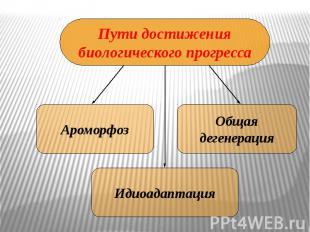 Пути достижениябиологического прогресса Ароморфоз Общаядегенерация Идиоадаптация