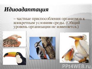 Идиоадаптация – частные приспособления организмов к конкретным условиям среды. (