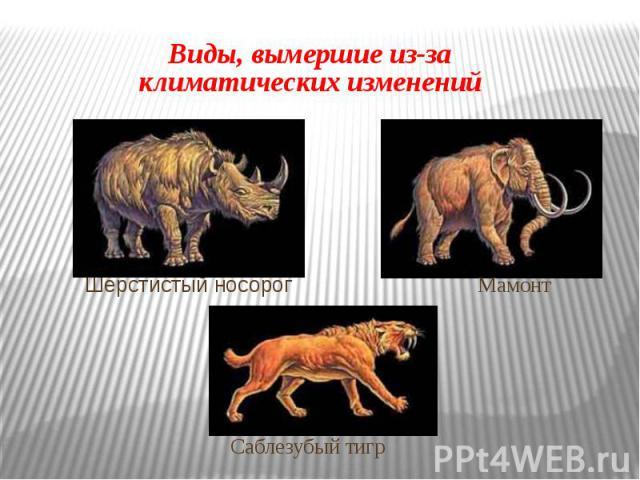 Виды, вымершие из-за климатических изменений Шерстистый носорог Мамонт Саблезубый тигр