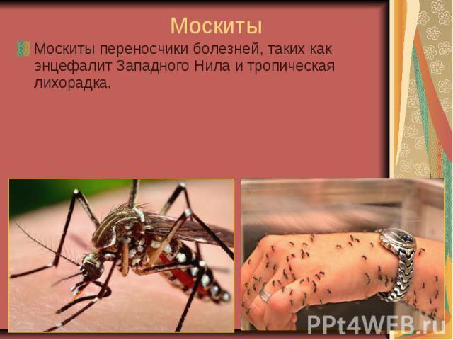 МоскитыМоскиты переносчики болезней, таких как энцефалит Западного Нила и тропическая лихорадка.