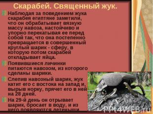 Наблюдая за поведением жука скарабея египтяне заметили, что он обрабатывает вязк