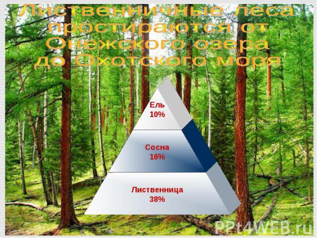 Лиственничные лесапростираются от Онежского озерадо Охотского моря
