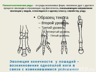 Палеонтологические ряды – это ряды ископаемых форм, связанные друг с другом в пр