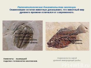 Палеонтологические доказательства эволюции.Окаменевшие остатки животных доказыва