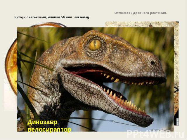Янтарь с насекомым, жившим 50 млн. лет назад.