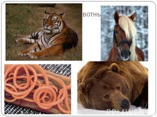 По способу питания животных делят на:ТравоядныеХищные (плотоядные)ВсеядныеПарази