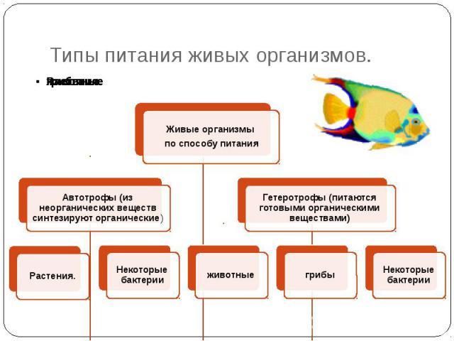 Типы питания живых организмов.