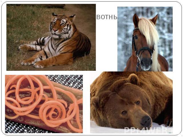 По способу питания животных делят на:ТравоядныеХищные (плотоядные)ВсеядныеПаразиты.