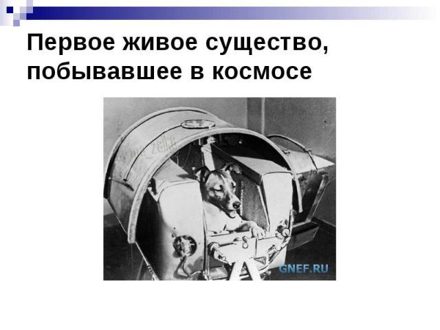 Первое живое существо, побывавшее в космосе